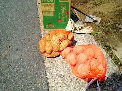 種いも(男爵・メークイン・キタアカリ)